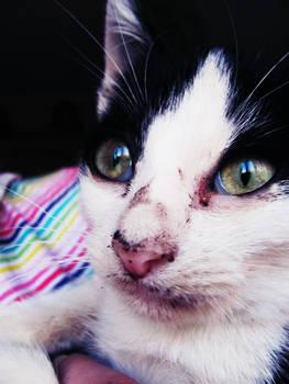Poor kittieh