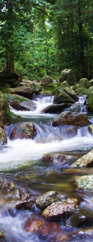 Goldsborough Valley