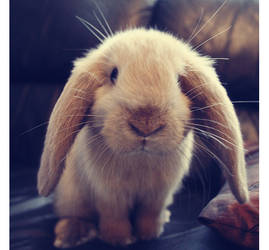 Bunnyy by Yehaa