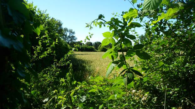 Fields Summer