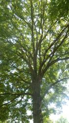 Lying under the ash tree