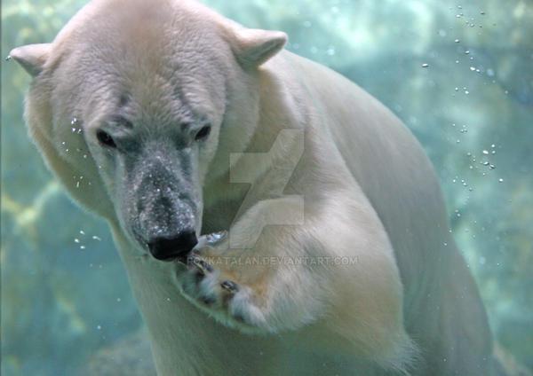 Polar Bear by roykatalan