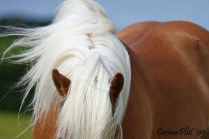 abstract haflinger