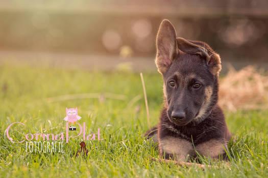 Sweet puppy love