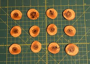 Cedar buttons 02
