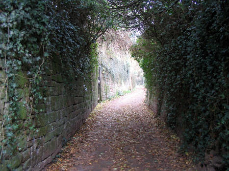 Ivy covered Alley stock 1
