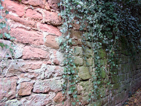 Ivy covered wall stock 1