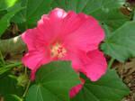 Pink flower stock 2