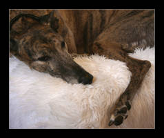 Greyhound by MadHatterVVVI
