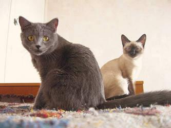Mia and Mory by pani-anna