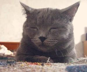 Sleepy Mory by pani-anna