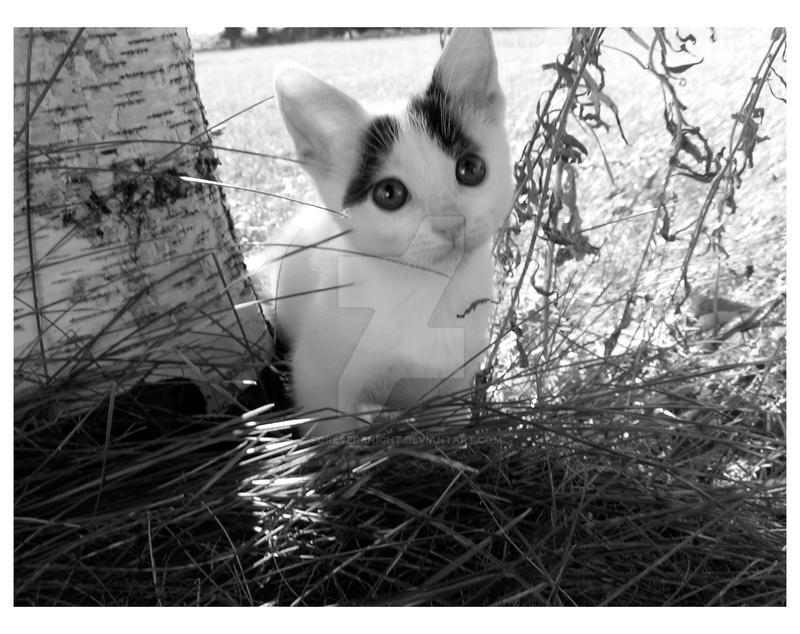 Autumn Warmth Kitten by ForeverKnight