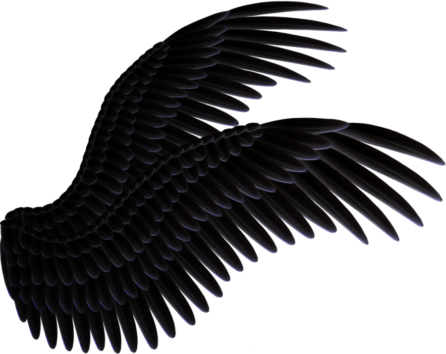 Wings Vector Images amp Stock Pictures Royalty Free Wings