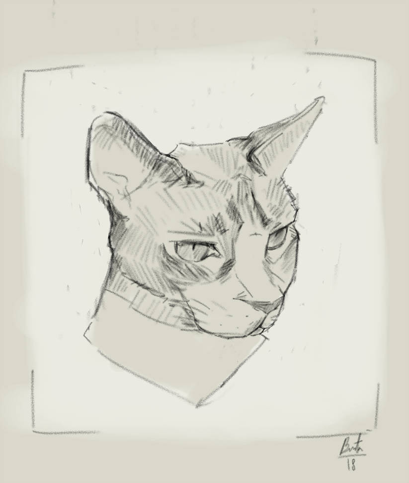 Cat Portrait From Photo