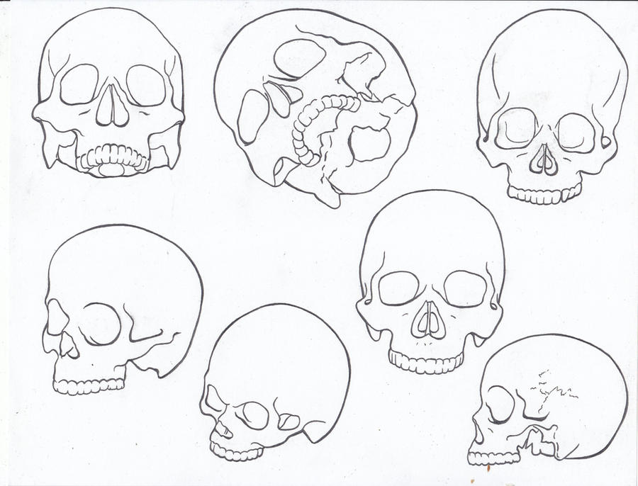Line Drawing Skull Study 213573900 on head looking down