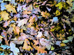 leaf litter by graphic-rusty