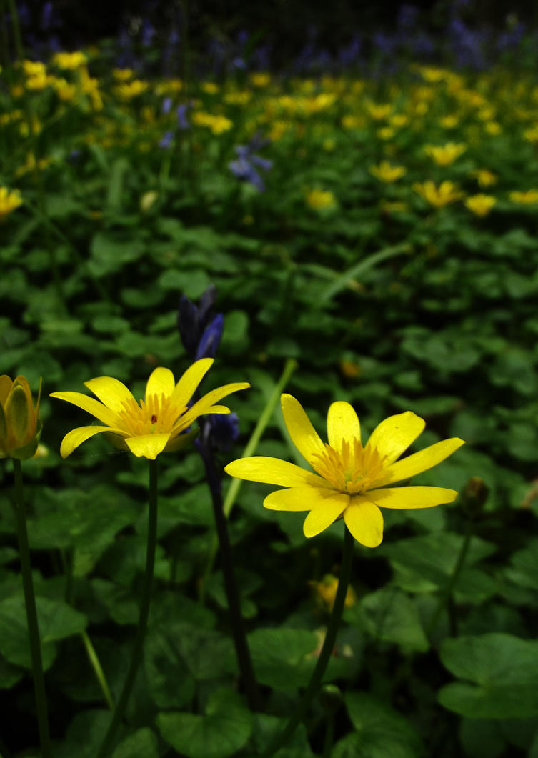 Celandine by graphic-rusty