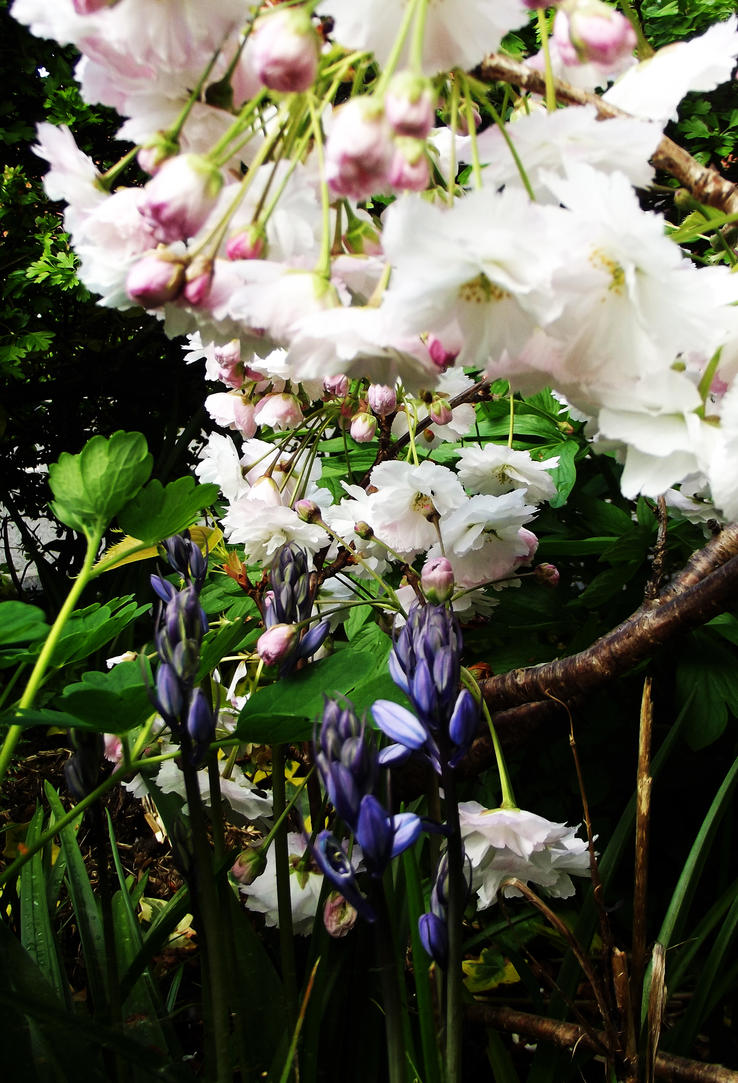 Cherry Blossom And Blue Bells by graphic-rusty