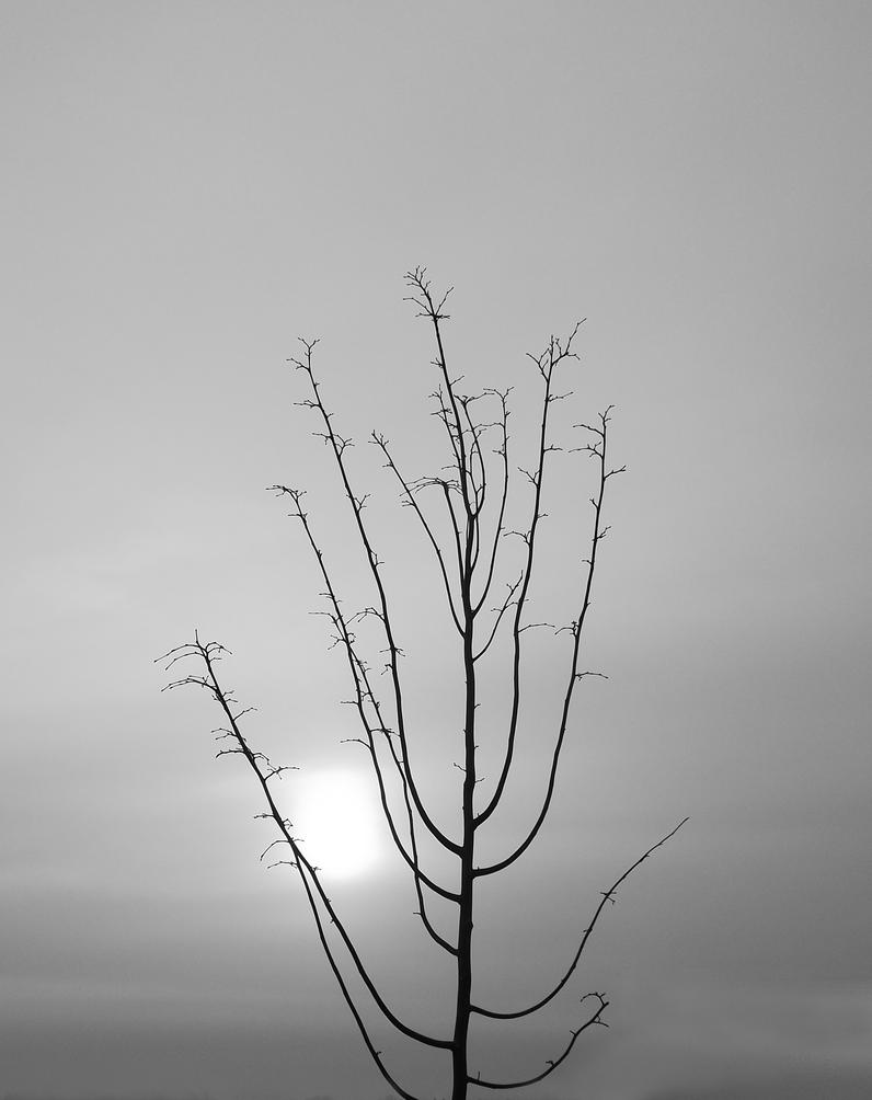 Winter Sun And Tree by graphic-rusty