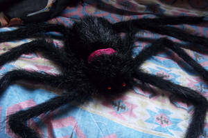 -+ my spider plush +- by ushirin