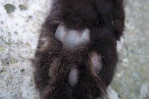 -Cute paw Johnnie- by ushirin