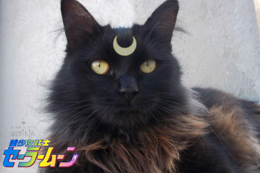 +-Moon Prism Power, Makeup!-+ by ushirin