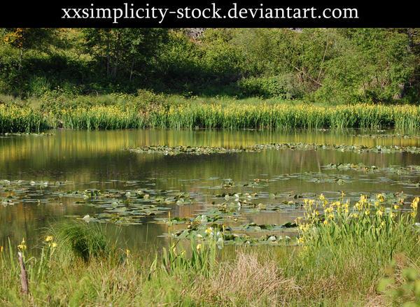 Swamp 1 by xxsimplicity-stock