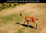 Deer 10