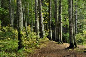 Autumn forest I by DarkBeforeDawn23