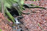 Forest BG 18