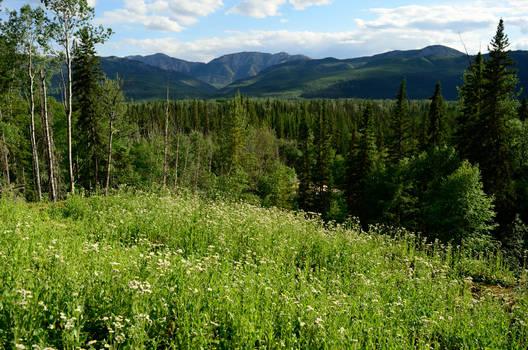 forest flower meadow 1