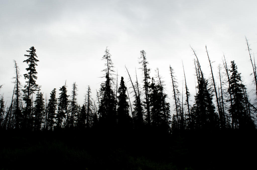 1920x1200 wallpaper forest silhouette - photo #20