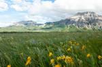 Alpine Meadow 9