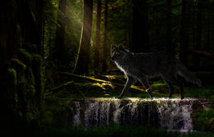 Itri: Whispers In The Dark by DarkBeforeDawn23
