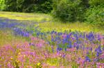 Wildflower Meadow 13 by DarkBeforeDawn23
