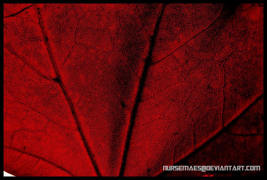 Veins by NurseMaes