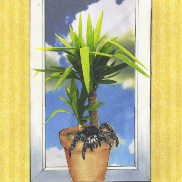 die spinne in der yucca palme by kaethe on deviantart. Black Bedroom Furniture Sets. Home Design Ideas