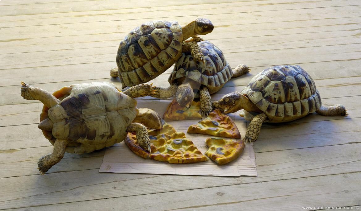 Hermann's tortoise by damir-g-martin