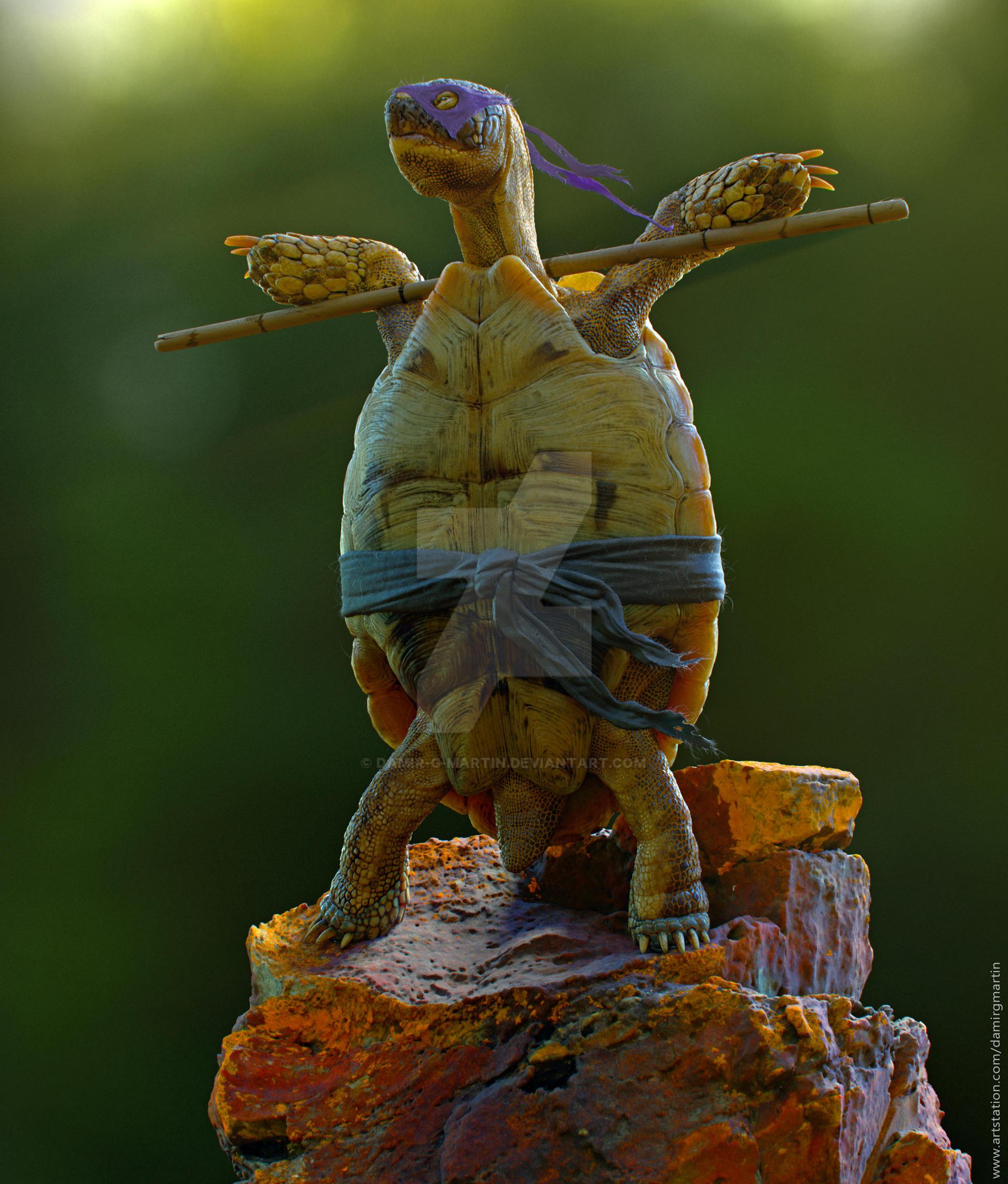 The Real Ninja Turtle, Err, Tortoise
