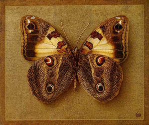Butterfly 3 by INDRIKoff