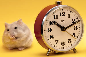 Bored Hamster by ErikTjernlund