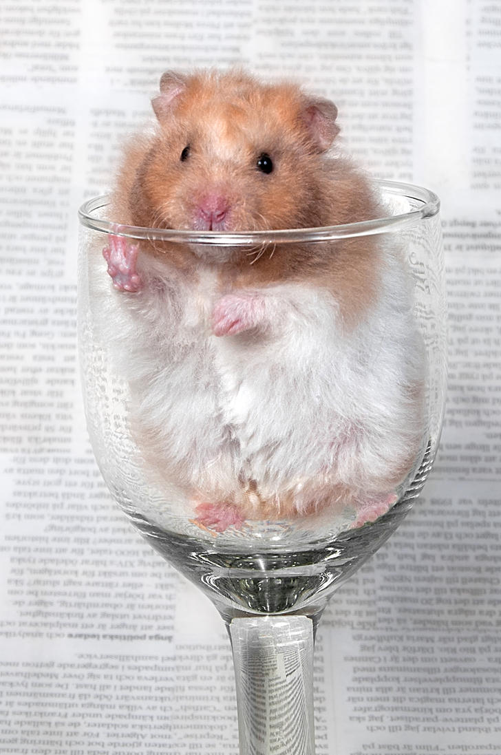 It's a Golden Hamster in a glass again by ErikTjernlund