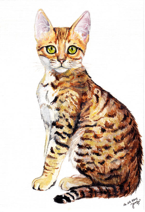 Bengal kitty by LenaZLair