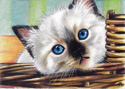 Ragdoll kitten by LenaZLair