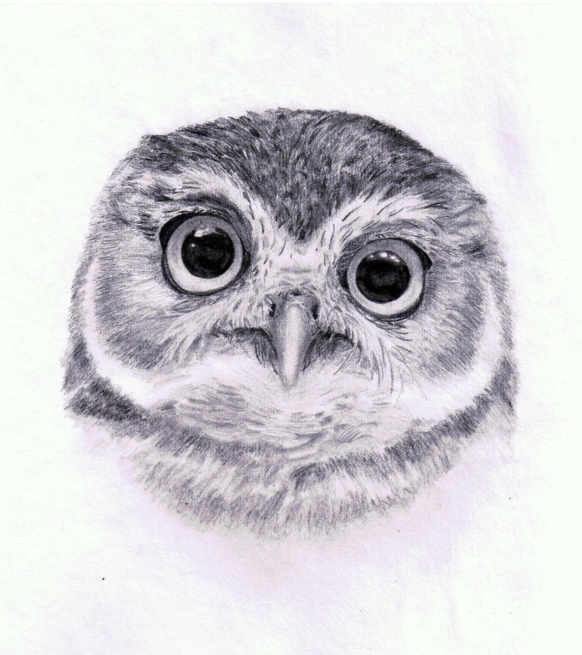 Burrowing Owl... Hoot by joanna--banana