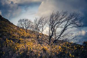 Helette Autumn