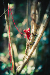 Unravel Tribute 1