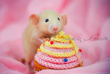 This cupcake is a lie by SammieGavin
