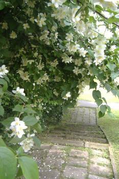 Jasmine Path