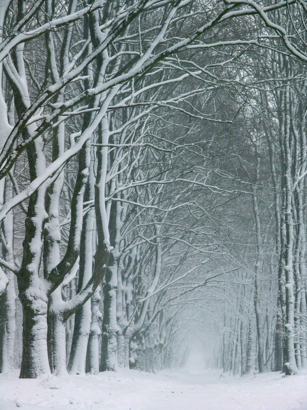 December 7th by FeveredDreams